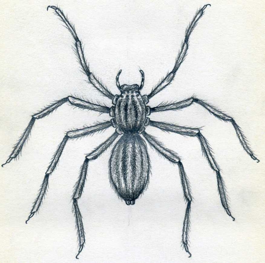 How To Draw Spider Simple Tutorial