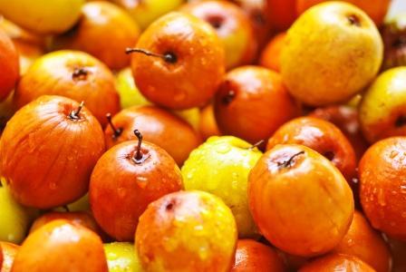 Ziziphus mauritiana, Chinee Apple, Jujube, Indian plum