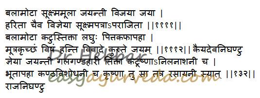 Jayanti - Sesbania sesban uses