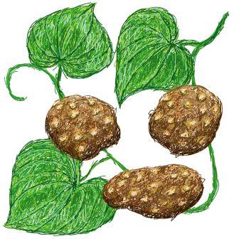 air potato - Varahikand