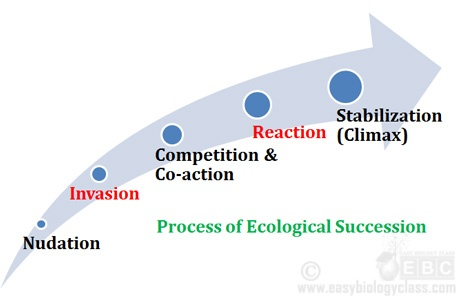 Stages Of Ecological Succession Ppt