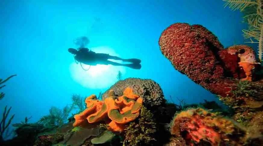 Diving Bay of Pigs