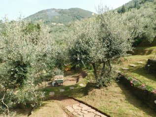 Bed And Breakfast Toscana. Olivo del Grillo