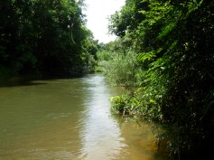 Khao Lak unternehmungen zum Khao Sok Nationalpark