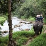 Elephant Trekking Tours from Khao Lak