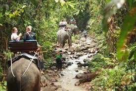 Elefantensafari
