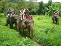 Elephant Tour - Trekking