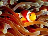 Nemo Home - Koh Tachai