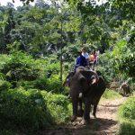 Elephant Trekking Khao Lak