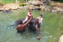 Elephant-Bathing-in-Kapong-4-300x200