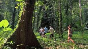 Hong Island Tour - Jungle Walk