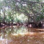 Little Amazon, Takuapa