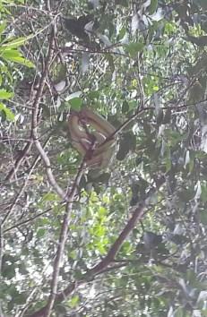 Snake at Little Amazon, Takuapa