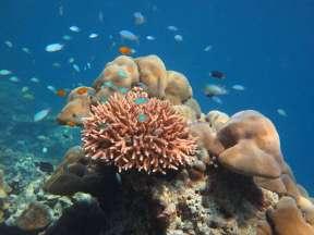Reef at Phi Phi Island