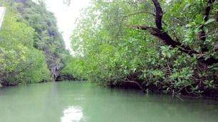 Mangroves in Phang Nga Bay