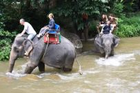 Phuket Rafting Tour - Elephant Trekking