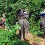 Elephant Trekking in Kapong, Thailand