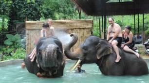 Elephant Trekking Phuket - Elephant Bathing