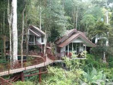 Khao Sok Tree House Resort