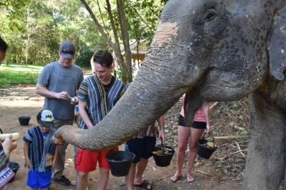 Elephant Sanctuary Phuket Feed them