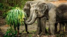 Elephant Sanctuary Phuket feed