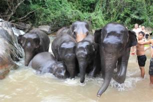Elephant Sanctuary Phuket - shower time