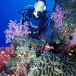 Scuba Diving on Coral Wall