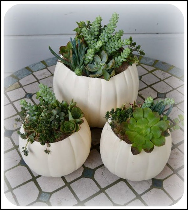 Cheap DIY Gardening ideas