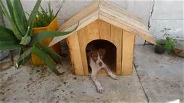Dog house made from pallet wood