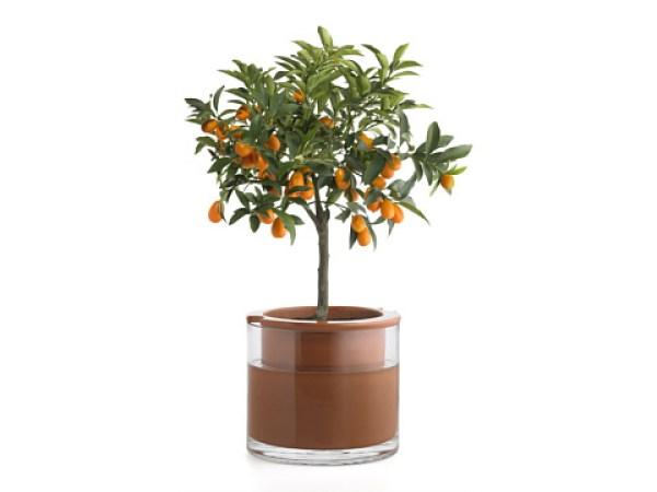 DIY Cute flower  pots