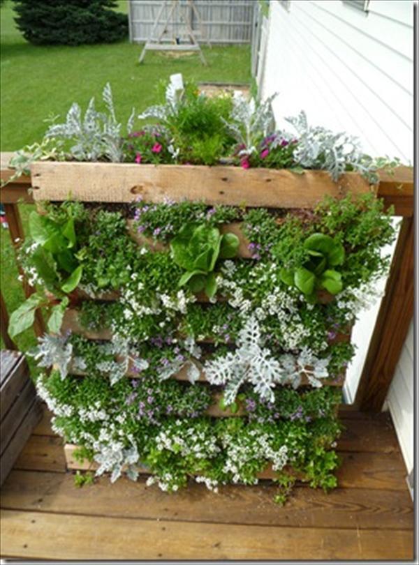 DIY easy wooden pallet vertical garden