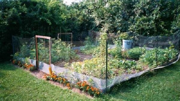 Innovative Lawn fencing ideas