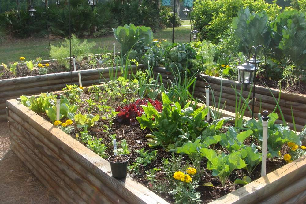 Easy Home Vegetable Gardening