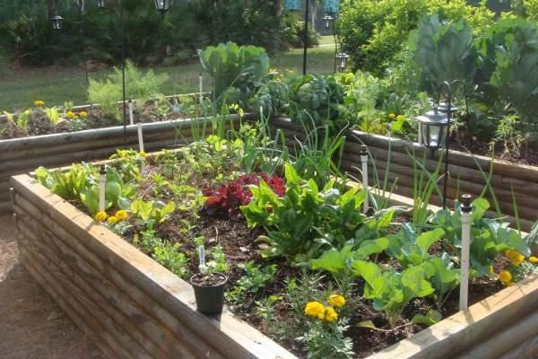 Easy home vegetable gardening