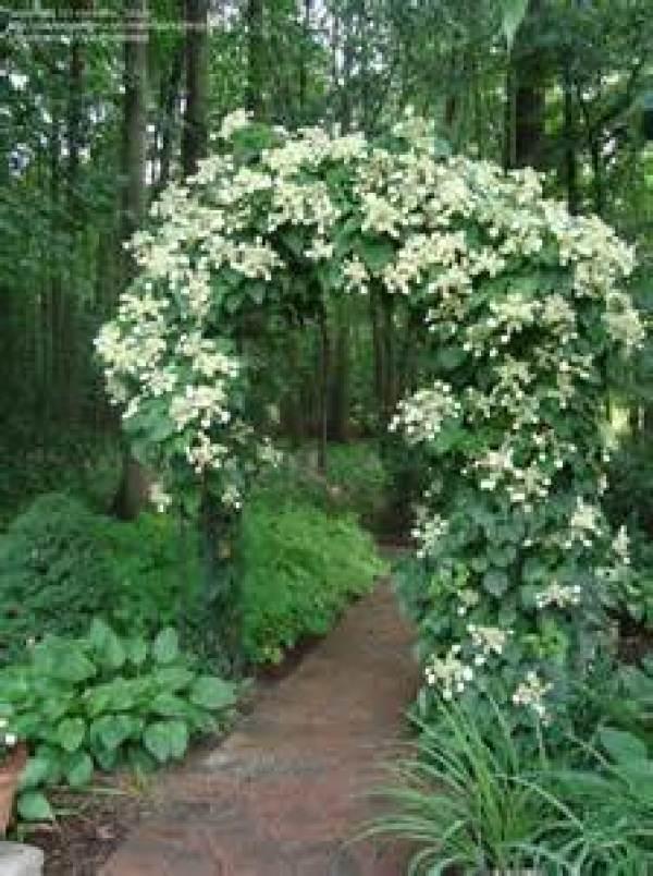 DIY garden flowers and plants