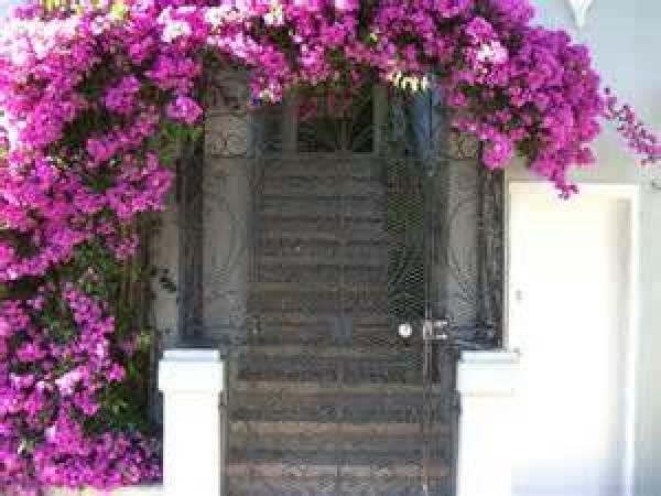 DIY creative flower  garden ideas
