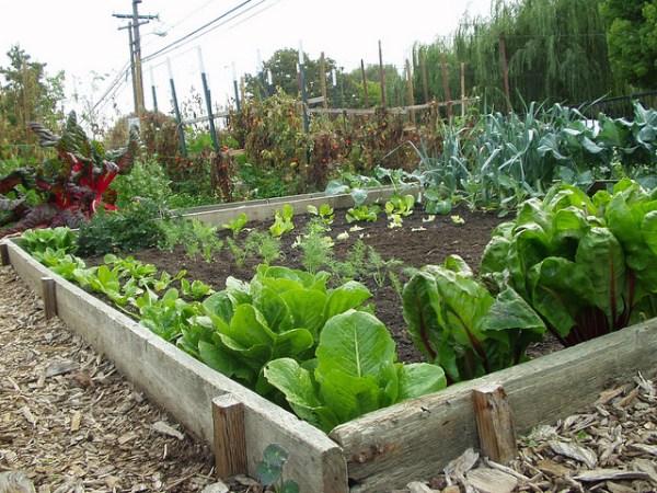 DIY landscaping idea