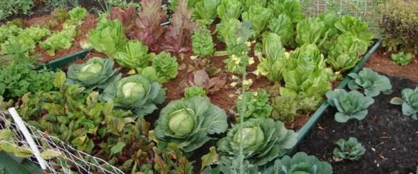 DIY home gardens plans