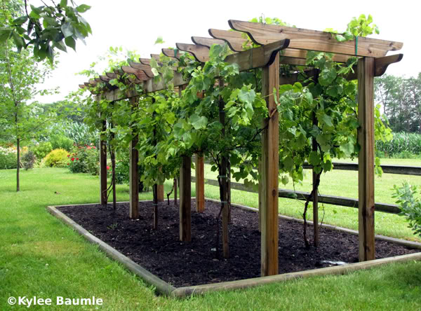 grow your own fruit and vegetable