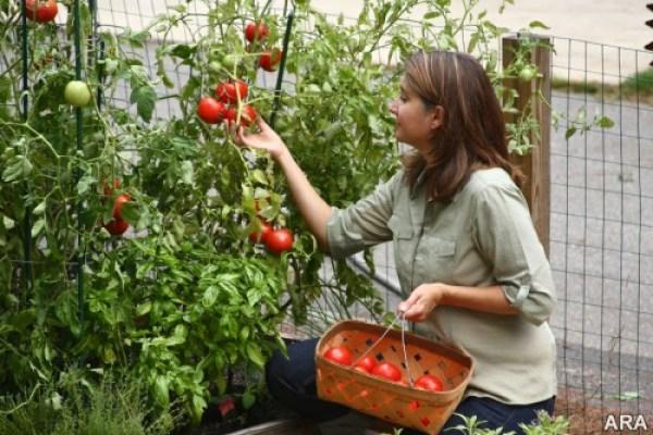 DIY Vegetable garden ideas