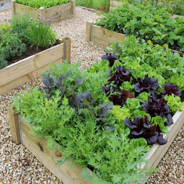 How to grow vegetable at home
