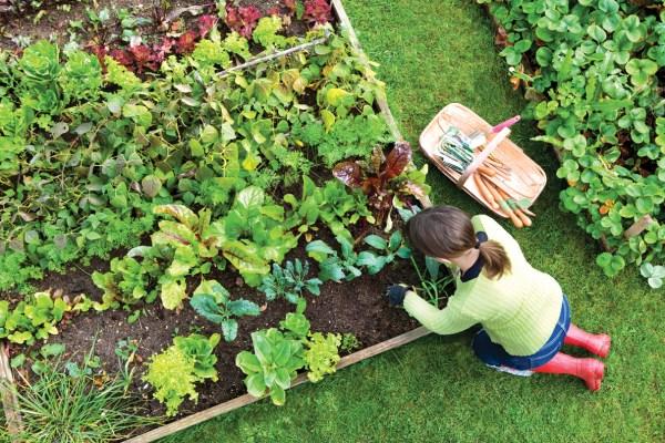 DIY vegetable gardens ideas