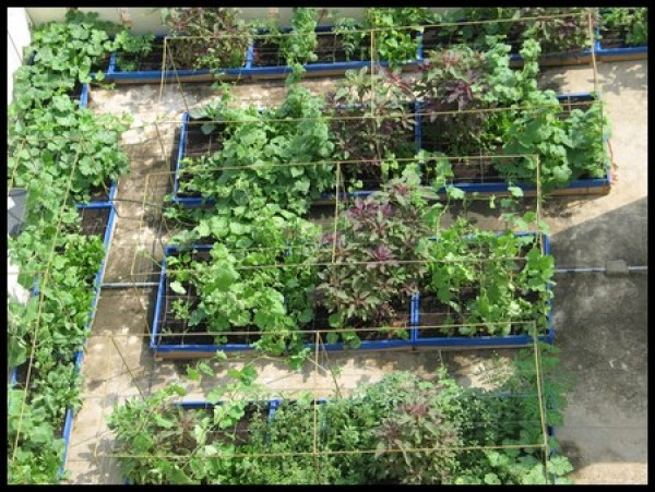 DIY BAckyard vegetable gardens