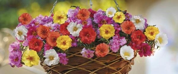 DIY hanging basket flowers