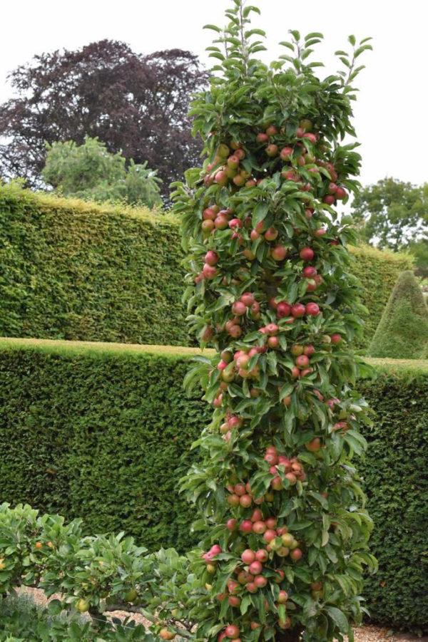 diy homegrown fresh fruits