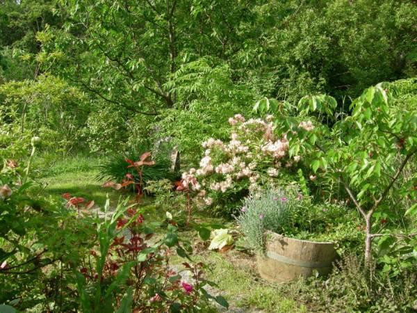 diy backyard garden ideas