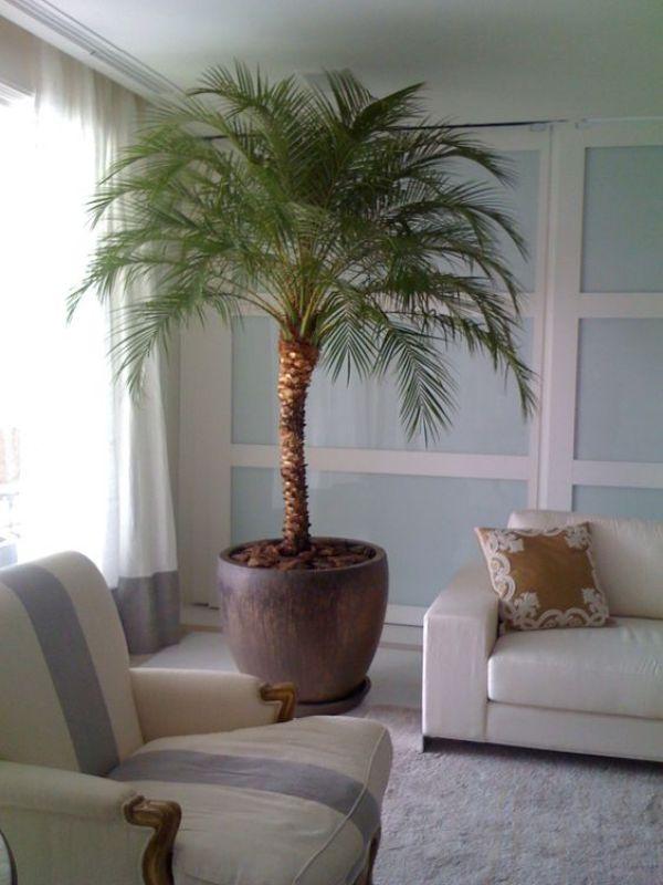 placing indoor gardens