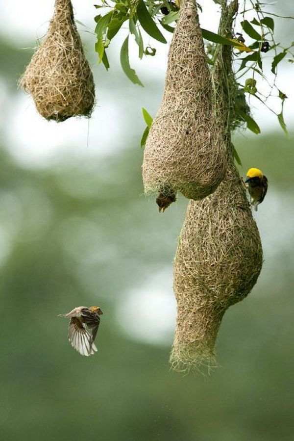 DECOR WITH NESTS