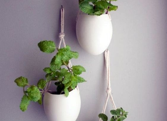 how to grow herbs indoor