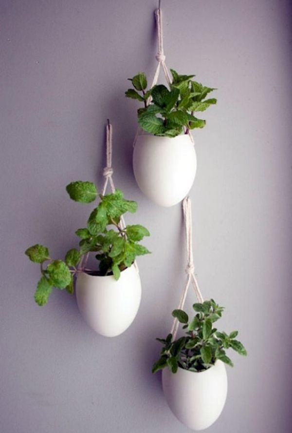 GROWING INDOOR PLANTS